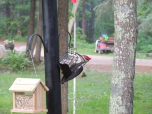 webwoodpecker